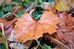 Brown jesieni inny I liść fotografia royalty free