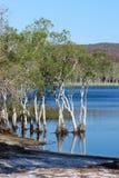 Brown jezioro, Stradbroke wyspa fotografia stock