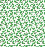 Brown kędzierzawe gałąź z zielenią opuszczają bezszwowego wzór Obraz Royalty Free