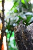 Brown kameleon odpoczywa na drewnianej beli obrazy royalty free
