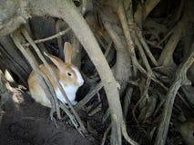 Brown-Kaninchenfell in†‹Baumhöhlen lizenzfreies stockfoto