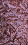 Brown karakul pelt Royalty Free Stock Image