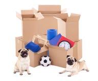 Brown kartony z różnym materiałem i ślicznymi psami odizolowywają Zdjęcia Royalty Free