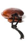 Brown kastaniety Zdjęcie Stock