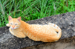 Brown-Katze Lizenzfreie Stockbilder