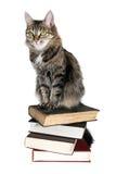 Brown-Katze auf Bücher Lizenzfreies Stockbild
