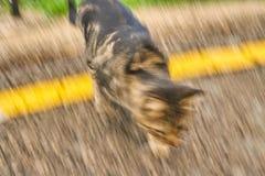 Brown-Katze in der Bewegung, die eine homogene Beschaffenheit mit dem Asphalt schafft stockfotografie