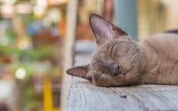Brown-Katze, die auf einem Bretterboden liegt Lizenzfreies Stockfoto