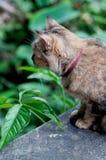Brown-Katze, die auf Wand sitzt Lizenzfreie Stockfotos