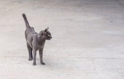 Brown-Katze, die in der Straße steht Stockfoto