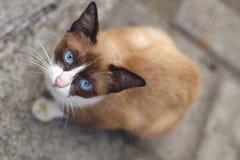 Brown-Katze, die Kamera betrachtet Lizenzfreie Stockbilder
