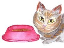 Brown-Katze, die um Lebensmittel bittet Lizenzfreie Stockbilder