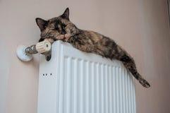Brown-Katze liegt auf der Batterie an einem kalten Tag Lizenzfreie Stockfotos