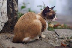 Brown-Katze sitzen auf Straßenrand Lizenzfreie Stockbilder