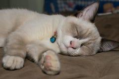Brown-Katzenschlafen Lizenzfreies Stockbild