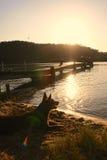 Brown-Kelpie auf dem Strand, der in Abstand unter Sonnenuntergang anstarrt Stockfotografie