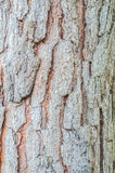 Brown-Kiefernbeschaffenheitshintergrund Stockbilder