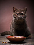Brown kitten and cat food Stock Photo