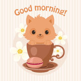 Brown kitten/cat in a tea/coffee cup. Brown kitten/cat in a tea cup vector illustration. Cute curious kitten/cat peeping from the cup Royalty Free Stock Photos