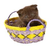 Brown Kitten in yellow basket. Royalty Free Stock Photos