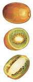 Brown Kiwi set Stock Images