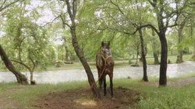 Brown koń Na smycz pozyci W parku zdjęcie wideo