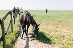 Brown koń w corral na gospodarstwie rolnym Zwierze domowy na polu fotografia royalty free