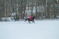 Brown koń z dżokejem zdjęcia royalty free