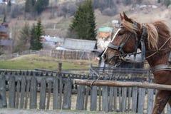 Brown koński bieg wzdłuż góry wioski drogi zdjęcie royalty free
