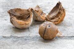 Brown koks z obieraniem na podłoga Zdjęcia Stock