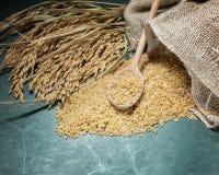 Brown kolec i ryż Zdjęcie Stock
