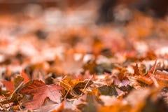 Brown kolorowy spadek opuszcza w stosie podczas jesieni Sel Zdjęcie Stock
