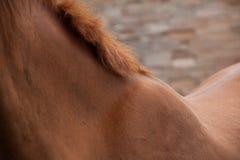 Brown konia szyja Obraz Royalty Free