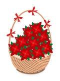 Brown-Korb der roten Weihnachtspoinsettia-Blume Lizenzfreie Stockfotos