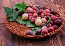 Brown kosz z stubarwnymi agrestami i liśćmi, na drewnianym tle Kolorowe czerwone i różowe jagody pełno Zdjęcie Royalty Free
