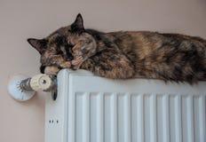 Brown kot kłama na baterii przy zimnym dniem Obrazy Stock