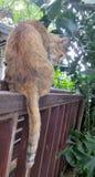 Brown kota opatrunek na drewnianym poręczu w jaskrawym ogródzie w ranku Fotografia Royalty Free