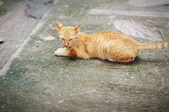 Brown koty bawić się na ulicie obraz royalty free