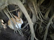 Brown królika kryjówki in†‹drzewa wydrążenia zdjęcie royalty free