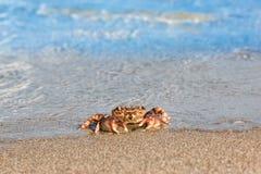 Brown krab na plaży powierzchni tle Obrazy Royalty Free