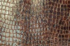 Brown-Krokodilbeschaffenheit Lizenzfreies Stockbild