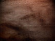Brown krokodyla skóra Zdjęcia Royalty Free