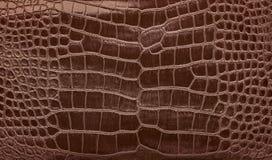 Brown krokodyla skóry glansowana naturalna tekstura Zdjęcie Royalty Free