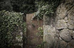 Brown kruszcowy ośniedziały drzwi na kamieniu zrobił ogrodzenia i pięcia rośliny Zdjęcie Royalty Free