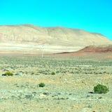 brown krzak w dolinnym Morocco Africa atlant sucha góra Fotografia Stock