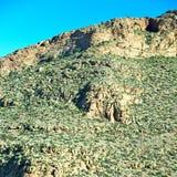 brown krzak w dolinnym Morocco   africa atlant suchy m Zdjęcie Royalty Free