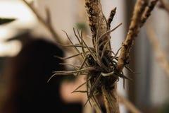 Brown kwiatu dorośnięcie na drzewie obraz stock