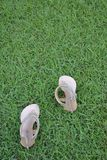 Brown Lady fashion shoes on lawn Royalty Free Stock Photo