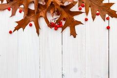 Brown laisse à sorbe les conseils blancs automne de composition Image stock