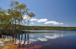 Brown Lake. On North Stradbroke Island, the worlds 3 largest sand island Royalty Free Stock Photos